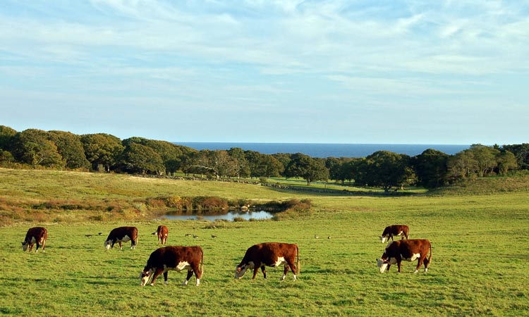 Keith Farm, Chilmark
